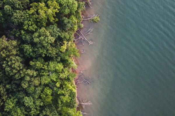 Fallen-Trees-Shoreline
