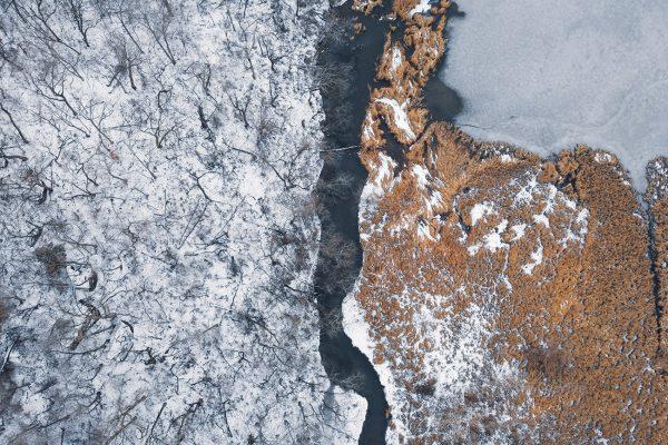 Snow Treeline