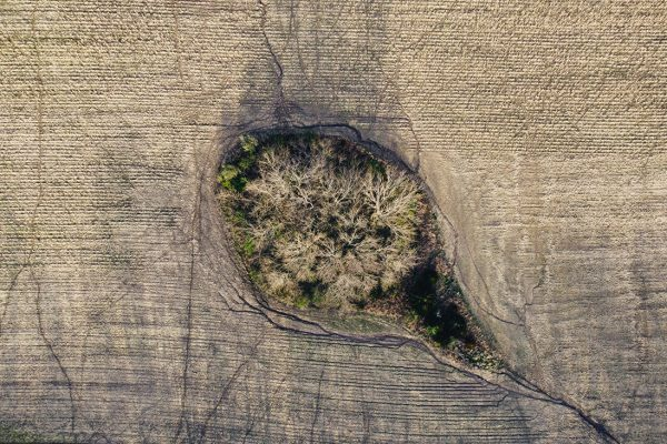Trees-in-a-Field